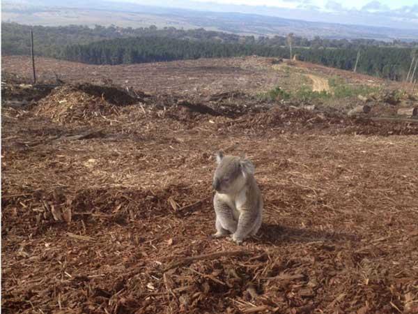 Meio ambiente no Brasil teve pior ano de sua história