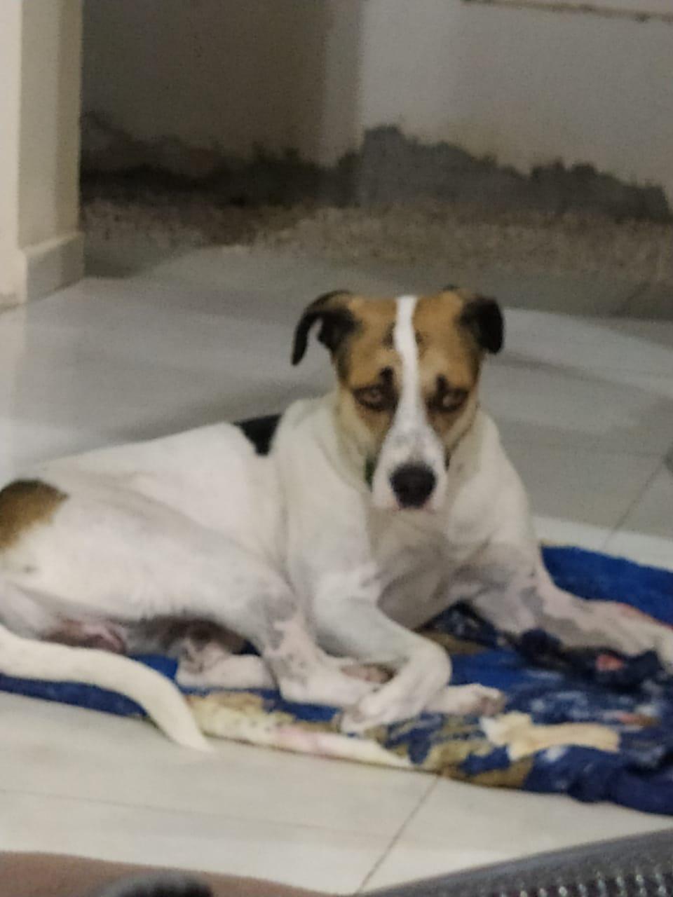 Senado aprova pena de até 5 anos para quem maltratar cães e gatos