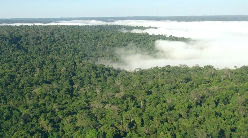 Ministério do Meio Ambiente não gastou nem 1% da verba para preservação, diz levantamento