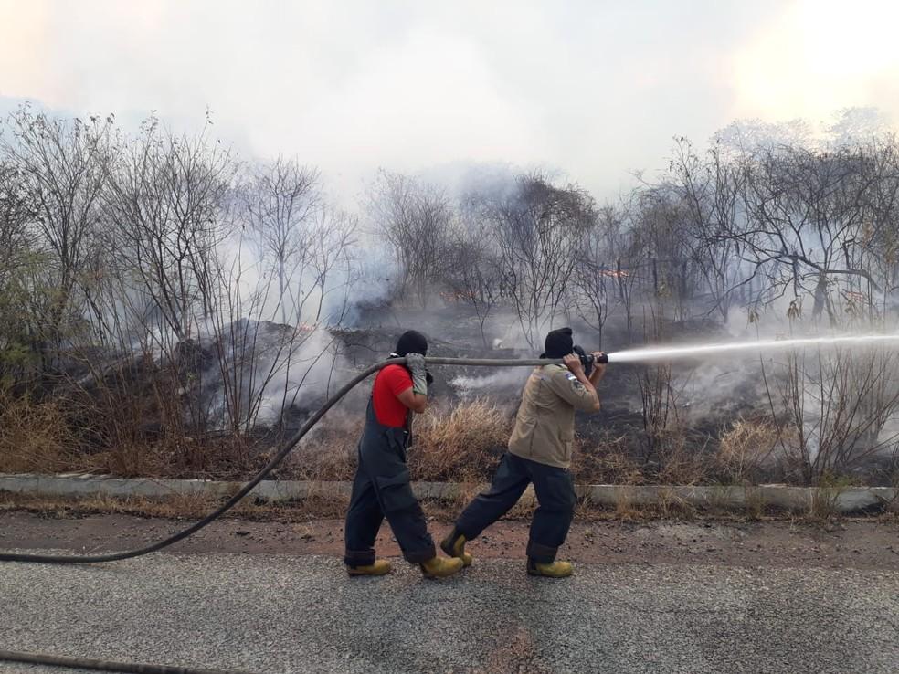 Incêndio destrói mil hectares e mata animais em cidades do Sertão de PE