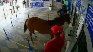 Cavalo invade lotérica, assusta clientes e vira piada na cidade de Cuité, na PB