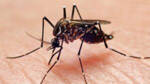 Em meio à pandemia da covid, Pernambuco tem aumento de 148% em casos confirmados de Chikungunya