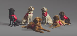 'Cães-detetives' identificam casos de Covid pelo cheiro com mais de 90% de precisão